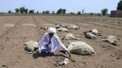 Tragedi Gelombang Panas Menyulitkan India