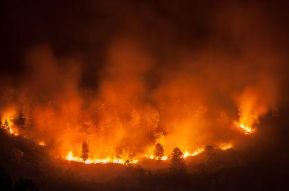 4 Tanaman Ini Dapat Mencegah Kebakaran Hutan