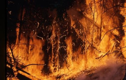 5 Fakta Kebakaran Hutan yang Terjadi di Gunung Panderman