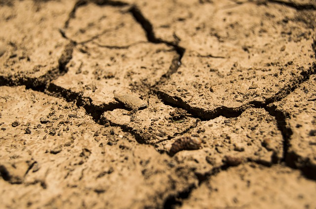 Menyulap Tanah Tandus Menjadi Ladang Duit